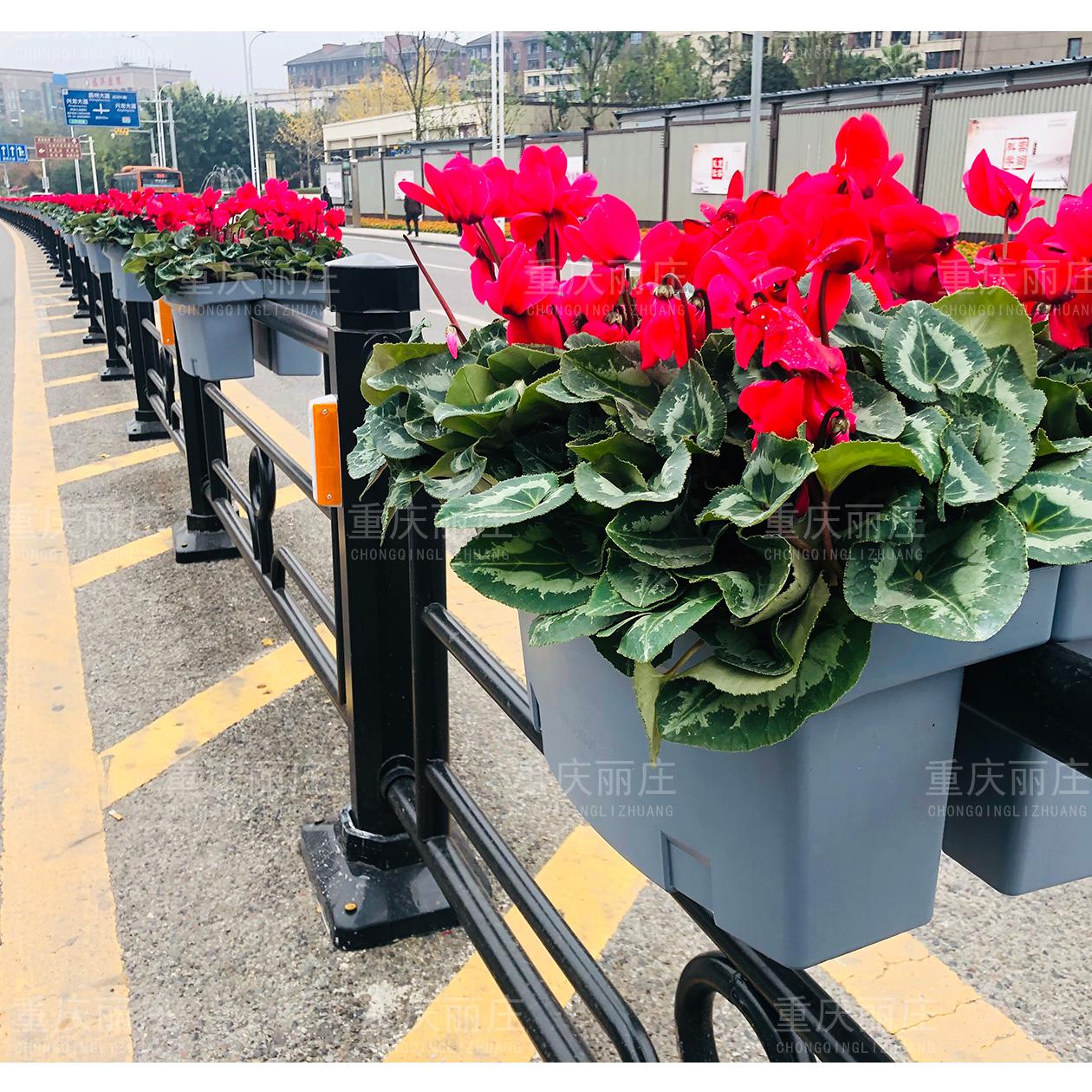 昌州大道隔离护栏+挂式花箱